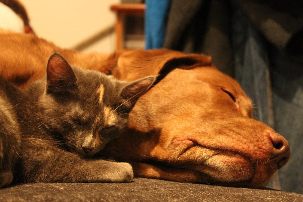 eutanasia, koira, kissa, kotieutanasia